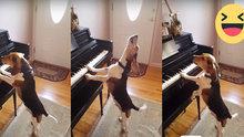 Piyano çalan yetenekli köpek
