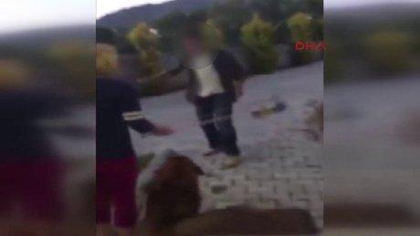 Bodrum'da hayvanseverlerin tepkisi çeken olay