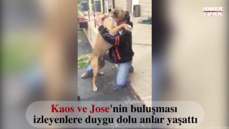 Kaos isimli köpek iki yıl sonra sahibiyle tekrar bir araya gelirse