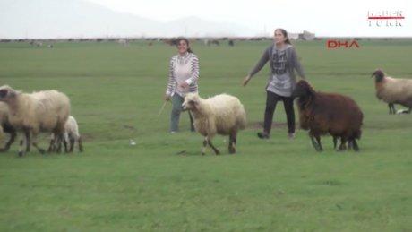 Muşlu çoban kızlar TEOG birincileri arasına girdi