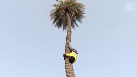 Ağaca ters tırmanan adam