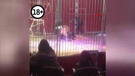 Fransa'daki sirkte korku dolu anlar
