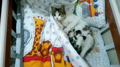 Hamile kedi bebek beşiğinde yavruladı