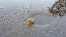 Kuma tuz döktüler Sülünes avladılar