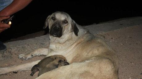 Kanalizasyon borusuna düşen yavru köpekler kurtarıldı