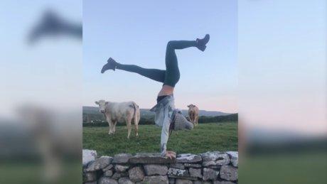 İlk defa yoga yapan birini gören inekler, yıllarca neden trene baktıklarını sorguladı