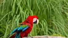 Kemençe sesini duyduğunda oynayan papağan