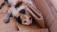Otomobilin motor bölümüne giren kedi kurtarıldı