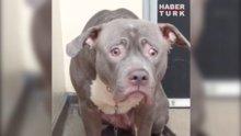 Barınağa bırakılan köpeğin yürek burkan görüntüleri