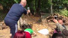 Sarıyer'de şehre inen domuz sürüsü kamerada