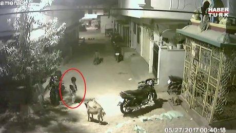 Cesur çocuğun sokak köpeklerine karşı gelmesi