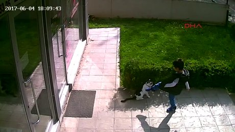 Kediye tekme atan çocuğu uyaran veteriner saldırıya uğradı