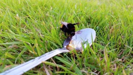 Ufacık dokunuşlarla onlara yardım edebiliriz! Arıları ölüme terk etmeyin