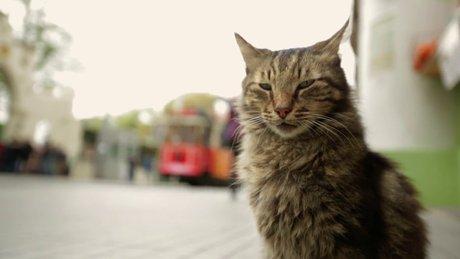 Kedi - fragman