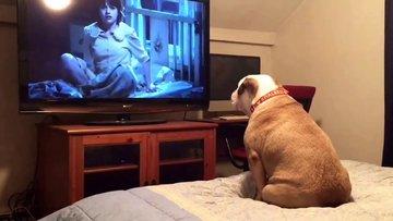 Korku filmi izleyen köpeğin tepkisi