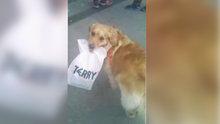 Ağzıyla poşet taşıdı herkes ona şaşkınlıkla baktı!