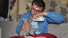 Kars'ta yaşayan bir kişi bulduğu yavru tilkiyi biberonla besledi