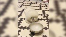 Sevimli köpeğin dumanla imtihanı