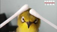 İyi masaja dayanamayan kuş