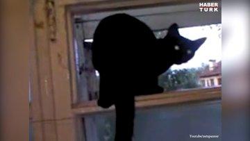 Havlayan kedi sahibine yakalanınca miyavlamaya başladı