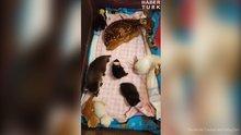 Yavru Hayvanların Dinlenme Saati