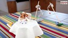 Dürüm yemenin hakkını veren minik hamster