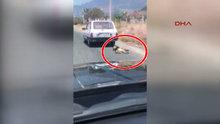 Arabanın arkasına bağladığı köpeği sürükledi!