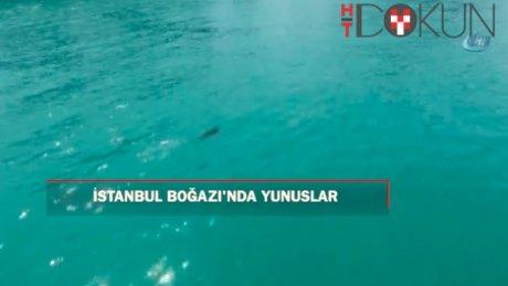 İstanbul Boğazı'nda havadan yunusların dansı