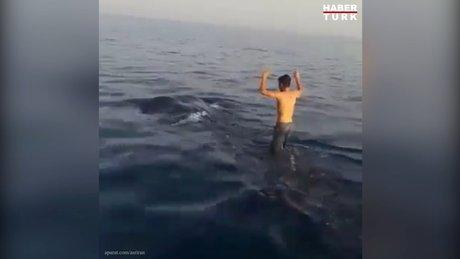 İranlı gençler balina köpekbalığının sırtında sörf yaptı