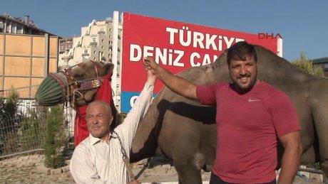 Kırkıpar Başpehlivanlarından Recep Kara'ya deve hediye edildi