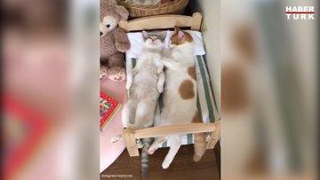 İzlerken uykunuzu getirecek tatlı kediler