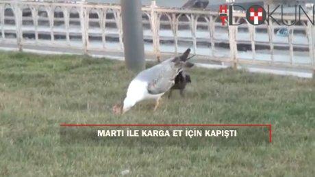 Taksim Meydanı'nda martı ile karganın et kavgası