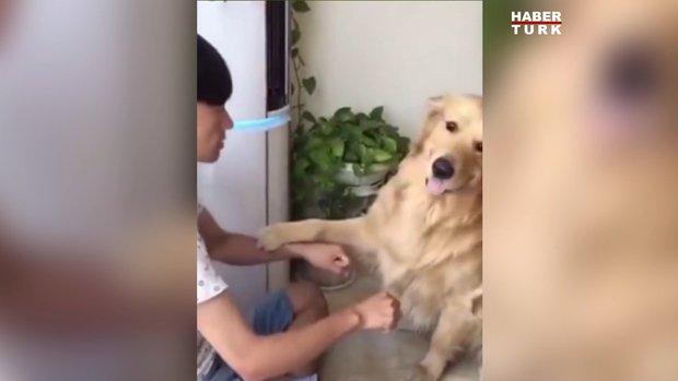 Erken sevinen köpeğin mutluluğu kısa sürdü