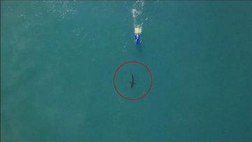 Köpek balığı sörf yarışmasını bastı