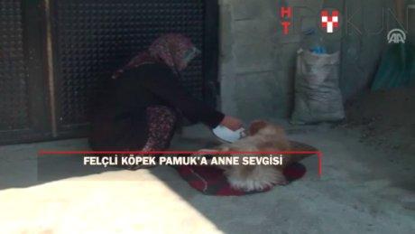 "Felçli köpek Pamuk'u hayatta tutan ""anne"" sevgisi"