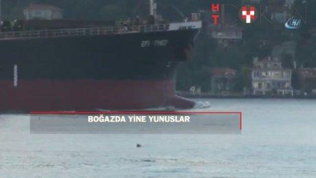 Yunuslar İstanbul Boğazı'nda renkli görüntüler oluşturdu