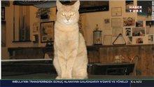 Alaska'nın kedi 'belediye başkanı' 20 yaşında öldü