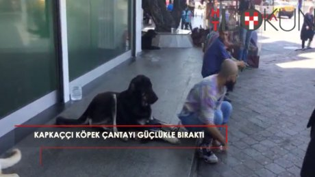 Taksim Meydanı'nda sevimli kapkaççı köpek