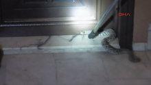 Manisa'da apartmana giren yılanı itfaiye yakalayıp doğal ortamına bıraktı