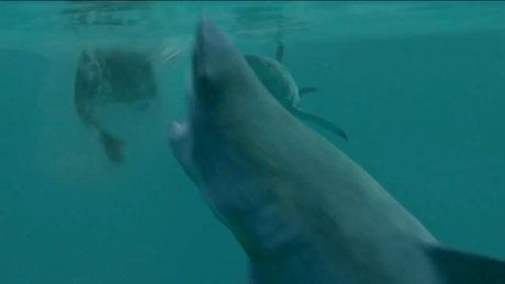 Open Water 3: Cage Dive (Açık Deniz: Kafes Dalışı) - fragman