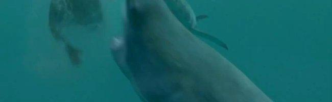 Açık Deniz: Kafes Dalışı