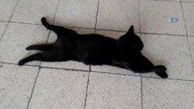 Sirkeci Garı'nda patilerini üst üste atarak uzanan kediye yoğun ilgi