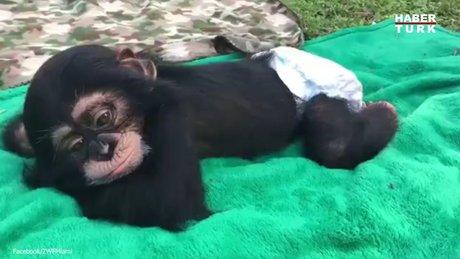 Bu maymun huzurun vücut bulmuş hali
