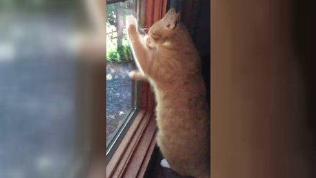 Gözleri görmeyen kedinin güneşi yakalama isteği