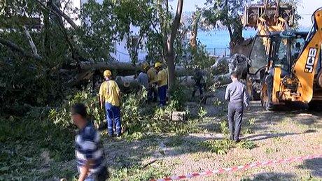 Şiddetli fırtına Çengelköy'deki asırlık çınarı devirdi