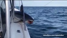 Teknede sıkışan köpekbalığı görenleri şoke etti