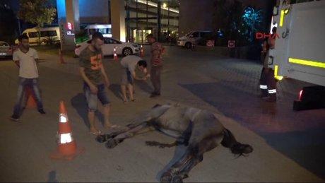 Faytona koşulan at sıcak ve susuzluktan öldü, sahibi bırakıp kaçtı