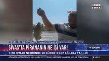 Sivas'ta pirananın ne işi var!