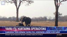 Yavru fili kurtarma operasyonu kamerada