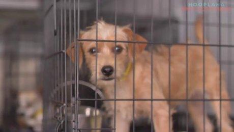 Köpekleri ötenaziden kurtaran örgüt